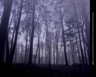 Misty forest by AmarieVeanne-Stock