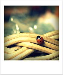 Little Lady Bug by Lilywen