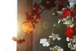 sun spot flower by depthdweller