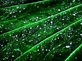 Emerald Condensation by Hunter-Arkaman