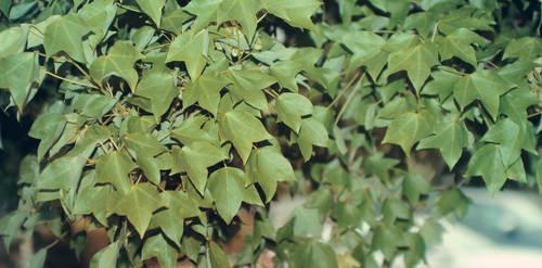 Strong Leaves by DerNosada