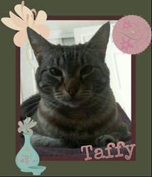 Taffy (My Cat) by Perberderp