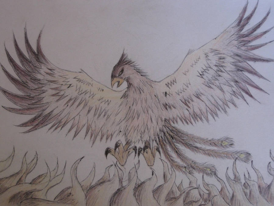 Phoenix Rising From The Ashes By Keithmaude On Deviantart
