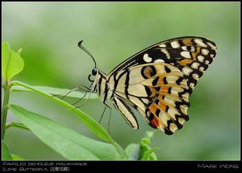BSP Butterflies 060708 II by log1t3ch