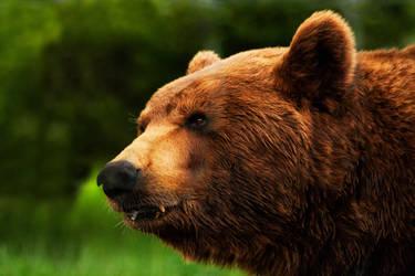 Teddy Bear by Ita-sama
