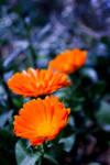 Flores de la isla by tararararahey