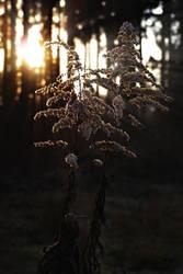 Winter morning by hadeeldar