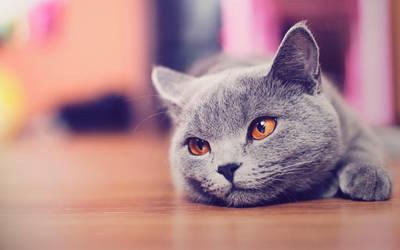 Cute cat wallpaper HD by AlexandruIuilian