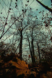 Autumn's End by BaciuC