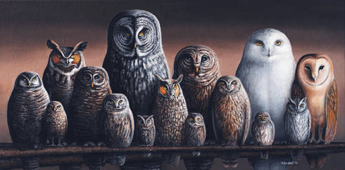 Owls of Canada by mikesblender
