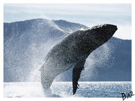 Whale by basgitaar