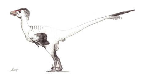 Dromaeosaurus albertensis by MoriceMonkey93