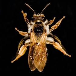 bee by yathosho