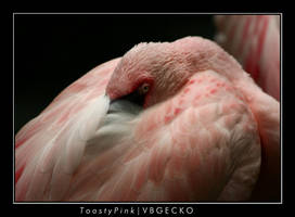 Toasy Pink by vbgecko
