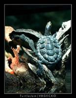 Turtle Jam by vbgecko