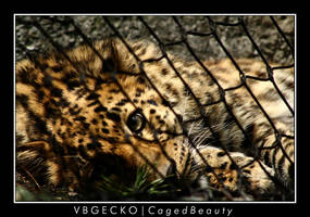 Caged Beauty by vbgecko