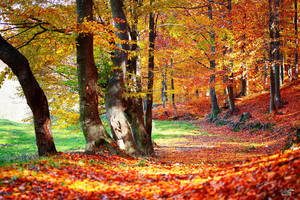 Autumn colours VII by valiunic