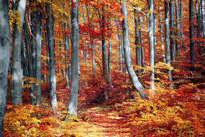 Autumn forest V by valiunic