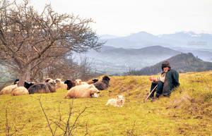 Shepherd by valiunic