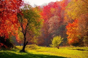 Autumn colors by valiunic
