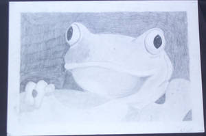 Frog by Chicken008