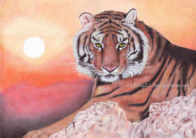 Tiger by 22Zitty22