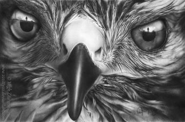 Bird by 22Zitty22