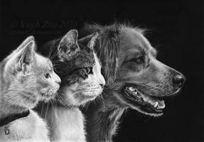 My pets by 22Zitty22