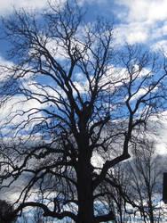 Creepy Tree by NightBlueDreams4102