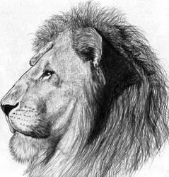 lion by shadow-danielz