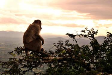 nature_monkey by shadow-danielz