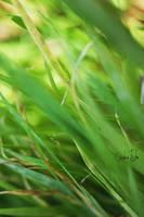 Grassy Nap by cheslah
