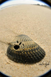 Shell by cheslah