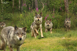 Run With the Pack by Kaeley