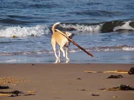 real big stick by BlazingfireRider