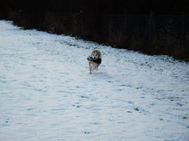 snow run by BlazingfireRider