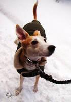 snow dog by BlazingfireRider
