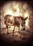 Island Donkey by irishtequilla