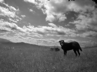 Dog and Sky by kaloskalyre