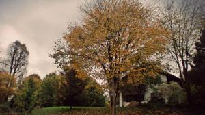 The Yellow Tree by Zorodora