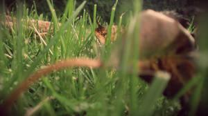 The Grass Perspective II by Zorodora