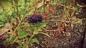The Flower Power by Zorodora