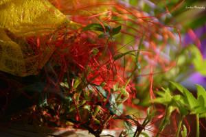 Rainbow-Shades Of Spring by Zorodora