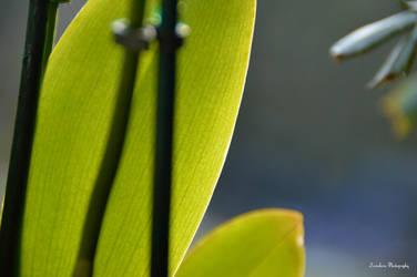 Green Impression by Zorodora