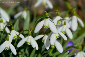 Spring Again by Zorodora