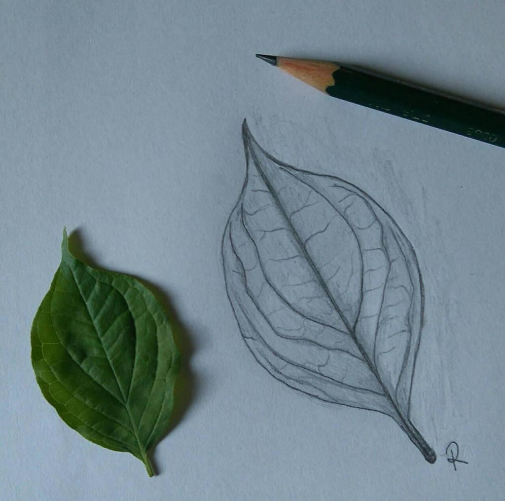 Leaf by Zorodora