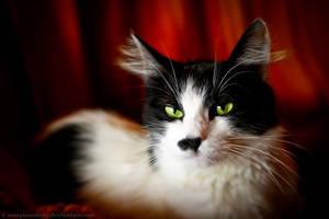 Pufu the Cat by ScorpionEntity