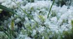 Frosty by SummerHaze132