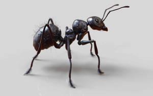 Ant by Ikameka