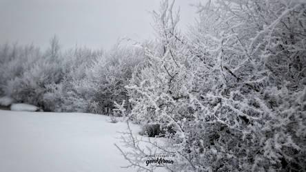 whites by quwen